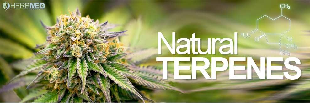 Naturliga Cannabis terpener