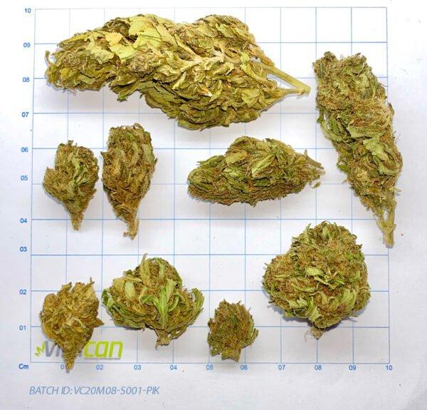 cbd buds cannabis
