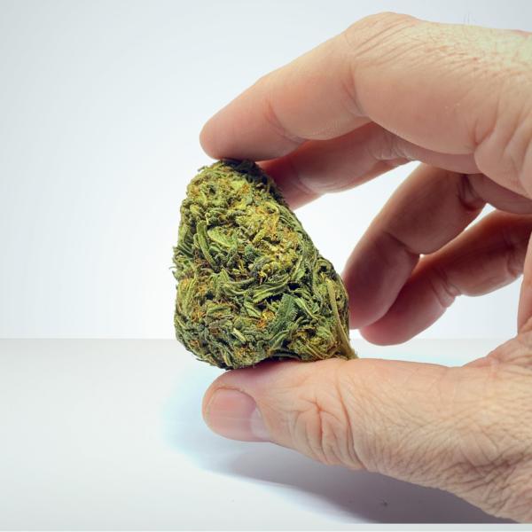 super-silver-haze-cbd-buds-sweden-sverige-herbmed-viracan-cannabis