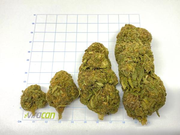 supersilverhaze-cbd-weed-cbd-buds-sverige-sweden-herbmed-viracan-cannabis