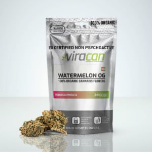 Watermelon OG CBD Cannabis