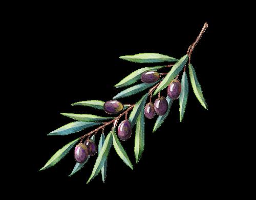 Harmony CBD Spray - Ingredienser - Olivolja