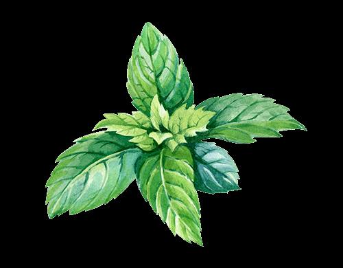 Harmony CBD Spray - Ingredienser - Pepparmyntsolja