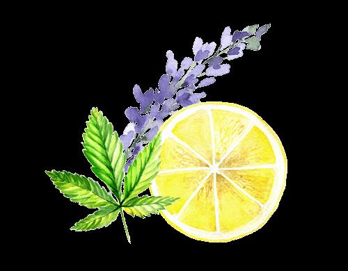 Harmony CBD Spray - Ingredienser - Terpener