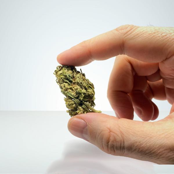 CBG-buds-super-silver-haze-cbg-weed-cannabis-sverige-lagligt-weed-laglig-cannabis-svensk-cannabis