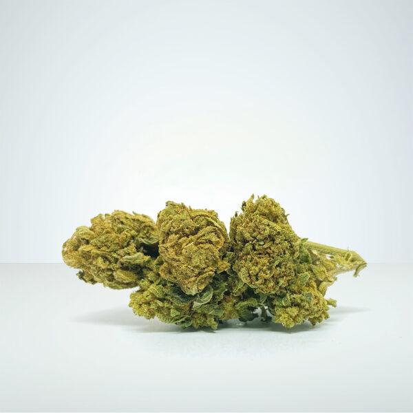 orginal-watermelon-1920--cannabis-flowers-cbdbuds-cbd-cbd-buds-sweden-cannabis
